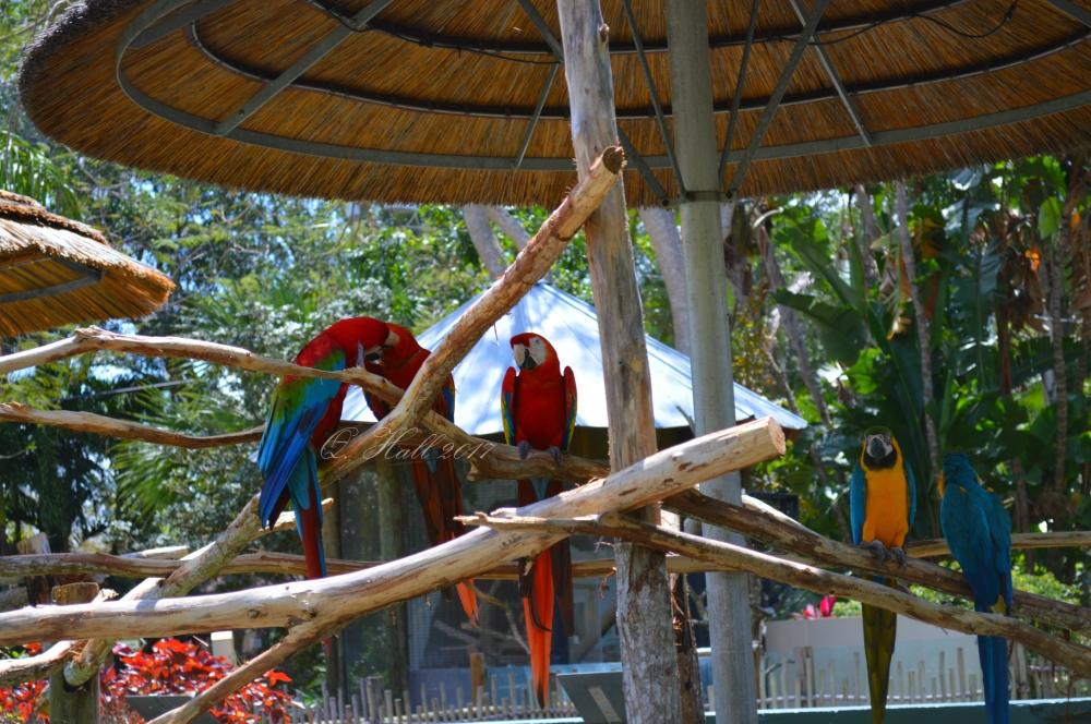 Parrots WP